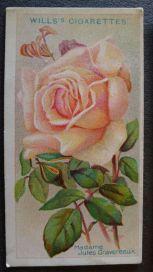 Rose, Madame Jules Gravereaux, Tea