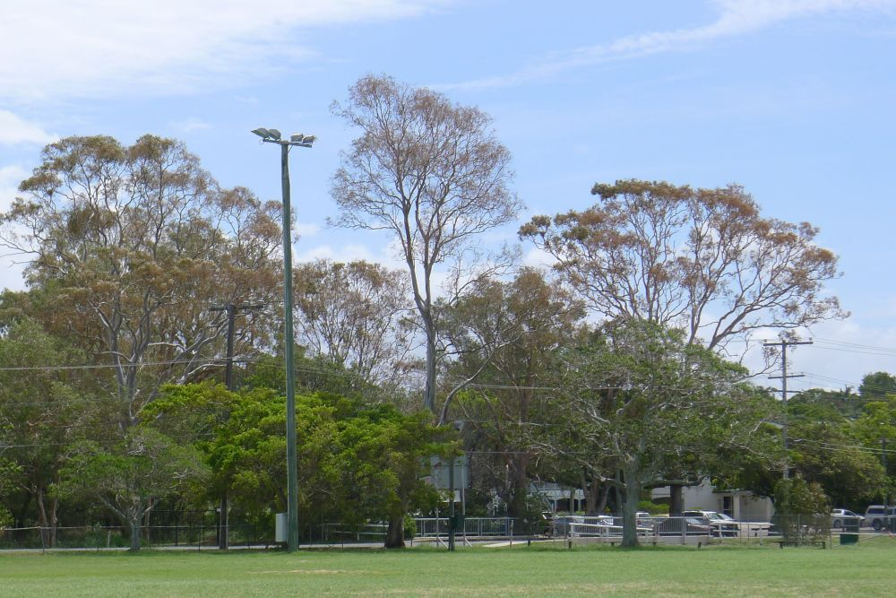 Salt spray damage to forest red gums (Eucalyptus tereticornis) in Bayside Brisbane, 12.2.13.