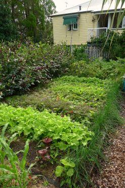 Autumn vegetables. Bellis, April 2013