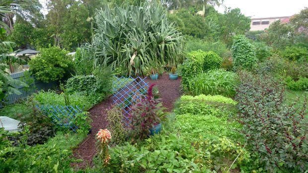 Bellis food garden in May