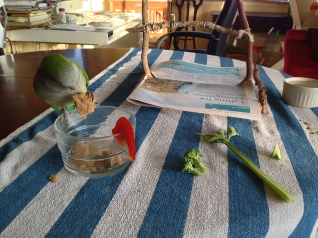 Oliver the Monk parrot was boarding here and enjoys the varied food