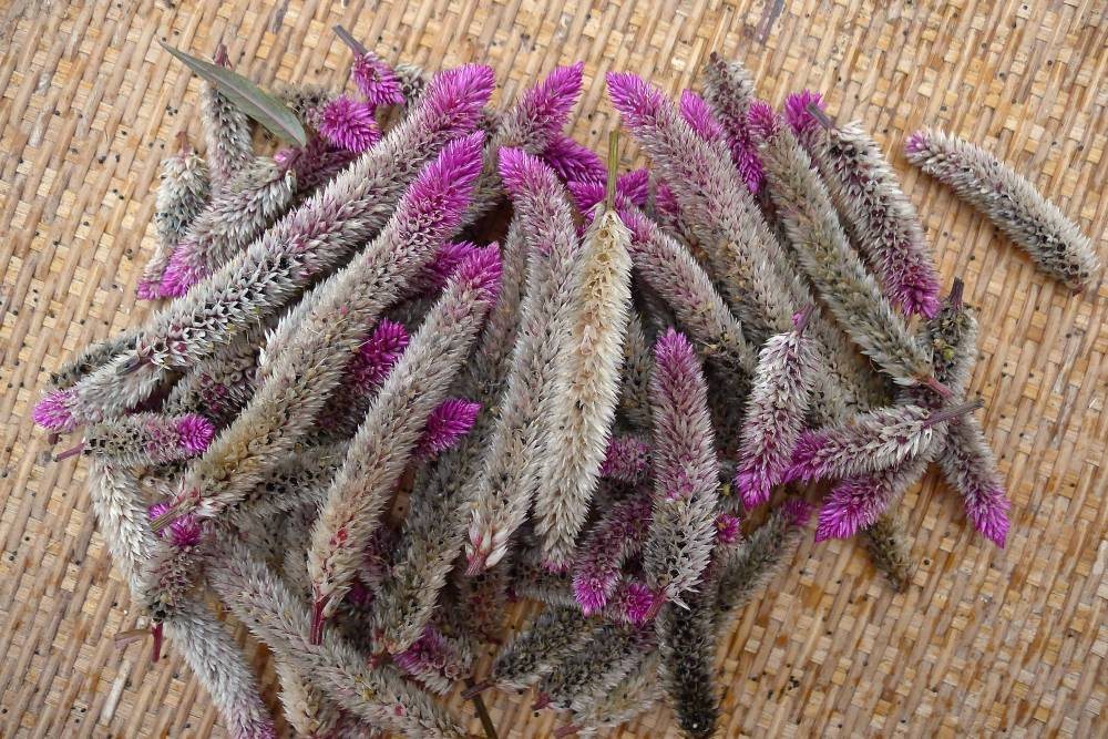 Lagos spinach, Celosia cristata: easily grown from seed, this produces pretty, butterfly attracting flowers and edible leaves
