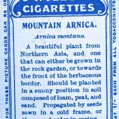 Alpine arnica, Arnica montana, Wills' Alpine Flowers, 1913
