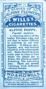 Alpine poppy, Papaver alpinum, Wills' Alpine Flowers, 1913
