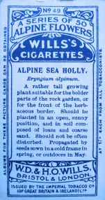 Alpine sea holly, Eryngium alpinum, Wills' Alpine Flowers, 1913