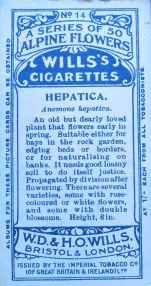 Anemone hepatica, Wills' Alpine Flowers, 1913