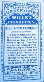Bird's eye primrose, Primula farinosa, Aster alpinus, Wills' Alpine Flowers, 1913