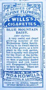 Blue mountain daisy, Aster alpinus, Wills' Alpine Flowers, 1913