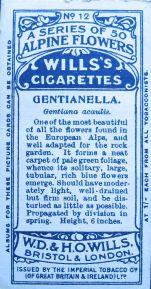 Gentianella, Gentiana acaulis, Wills' Alpine Flowers, 1913
