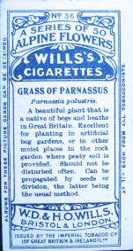 Grass of Parnassus, Parnassia palustris, Wills' Alpine Flowers, 1913