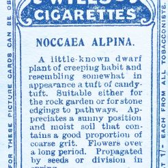 Noccaea alpina, Wills' Alpine Flowers, 1913