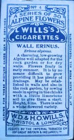Wall erinus, Erinus alpinus, Wills' Alpine Flowers, 1913