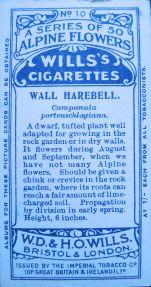 Wall harebell, Campanula portenschlagiana, Wills' Alpine Flowers, 1913