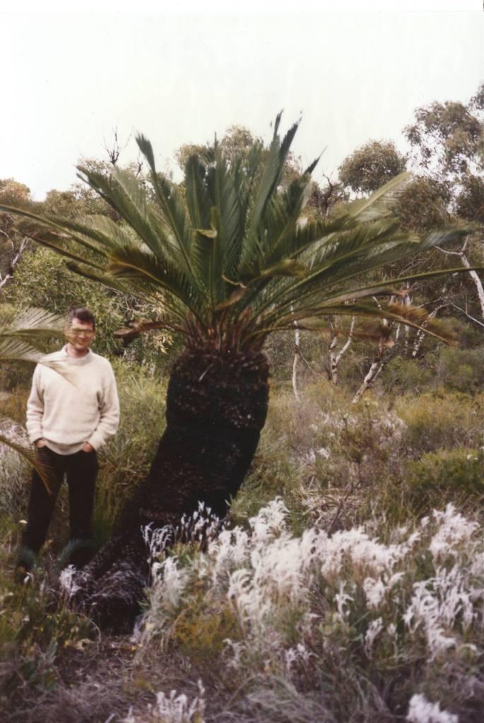 Jeff Poole with mature Macrozamia hughsii, Western Australia