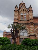 old Lepidozamia peroffskyana, Brisbane Museum