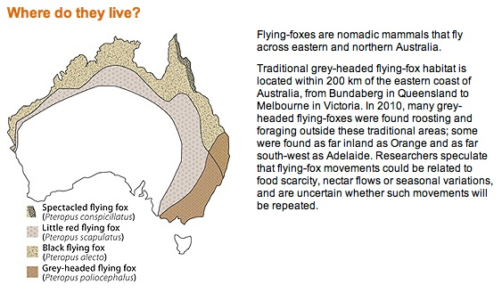 flying fox distribution in Australia