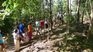 Dry rainforest tour: Quaker arboretum