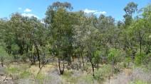 Relictual Dry Rainforest, Moree