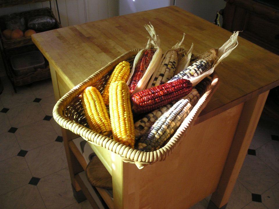 corn Red Aztec, Manning Pride (golden), Anasazi (speckled)