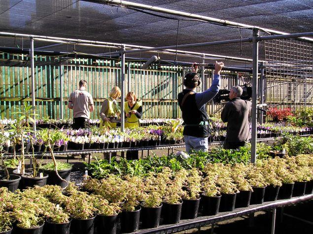 ABC Gardening Australia films botanic gardens volunteers