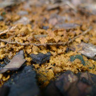 Stingless bee garbage dump