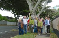 Local character: Redcliffe Tree Society loves its veteran figs