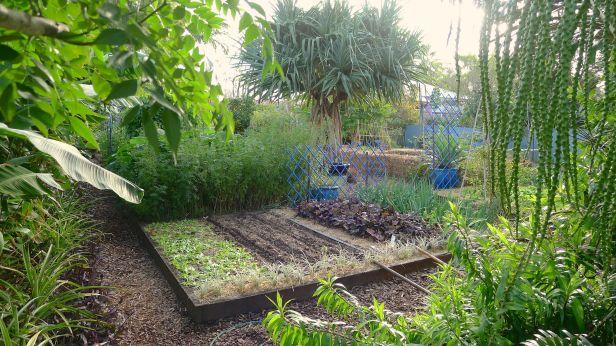 My garden in 'winter'