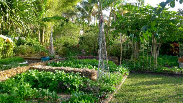 Subtropical food garden in winter
