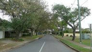 Pride of Bolivia, Tipuana tipu, Grant Street, Redcliffe