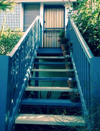 Cycad staircase