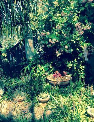 Rondeletia amoena is now Rogiera amoena