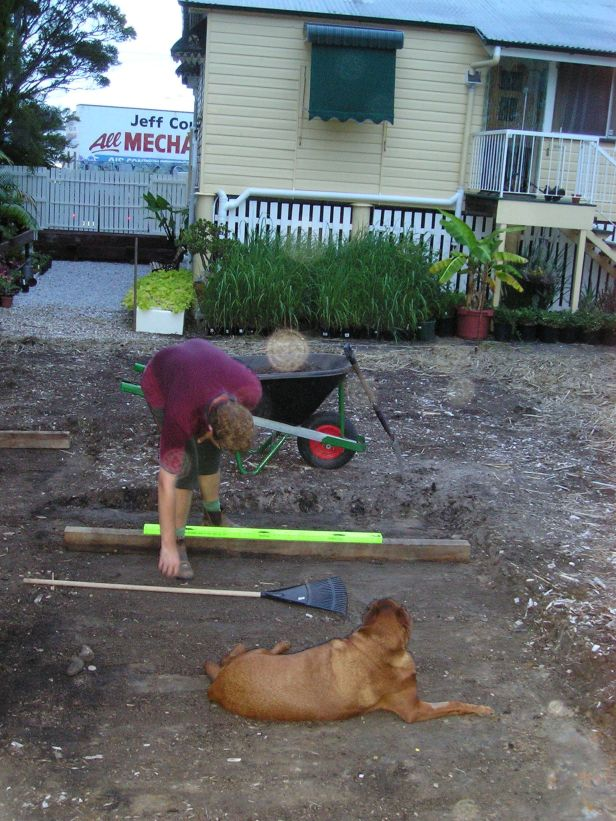 Setting out a Durban grass lawn for George, Jan 2005