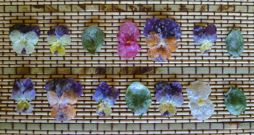 sugar coated edible flowers