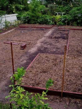 setting out the vegetable garden, autumn 2005