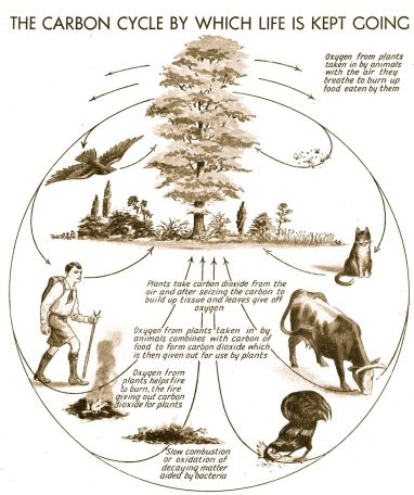 Gift from my Dad: The Carbon Cycle, Popular Science Educator, 1930's