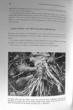 3) Under-exploited tropical Cocoyam, Xanthosoma saggitifolia