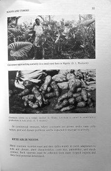 4) Under-exploited tropical Cocoyam, Xanthosoma saggitifolia