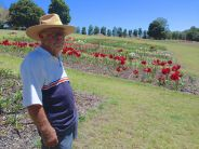 A lifetime achievement: Mick Maguire's Hippeastrum Farm