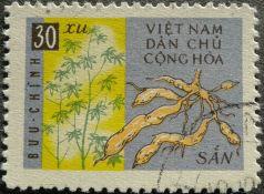 Cassava, Manihot esculenta