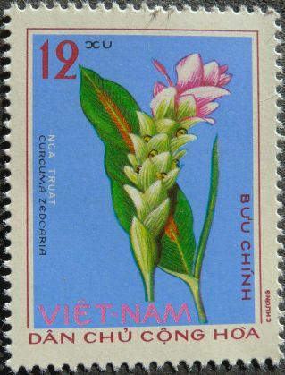 White turmeric, Curcuma zedoaria