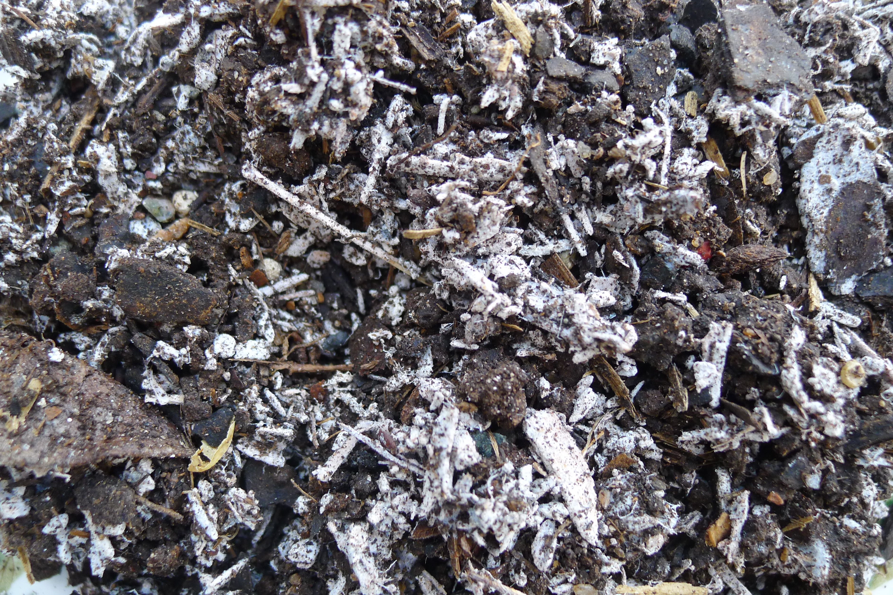 Why do fresh woodchip and potting mix turn mouldy and for What does soil