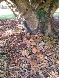 mango with original bricks from lockup