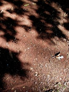 Redlands soil