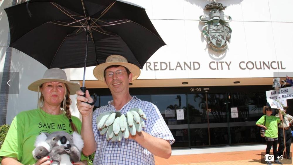 Brolly, Bananas for Mayor of Redlands