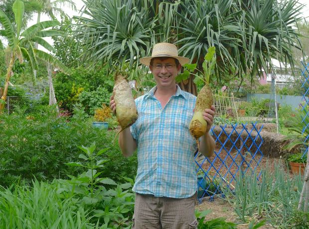 Jerry w mangelwurzel, Beta vulgaris subsp. maritima LHS 2.85kg, RHS 1.7kg