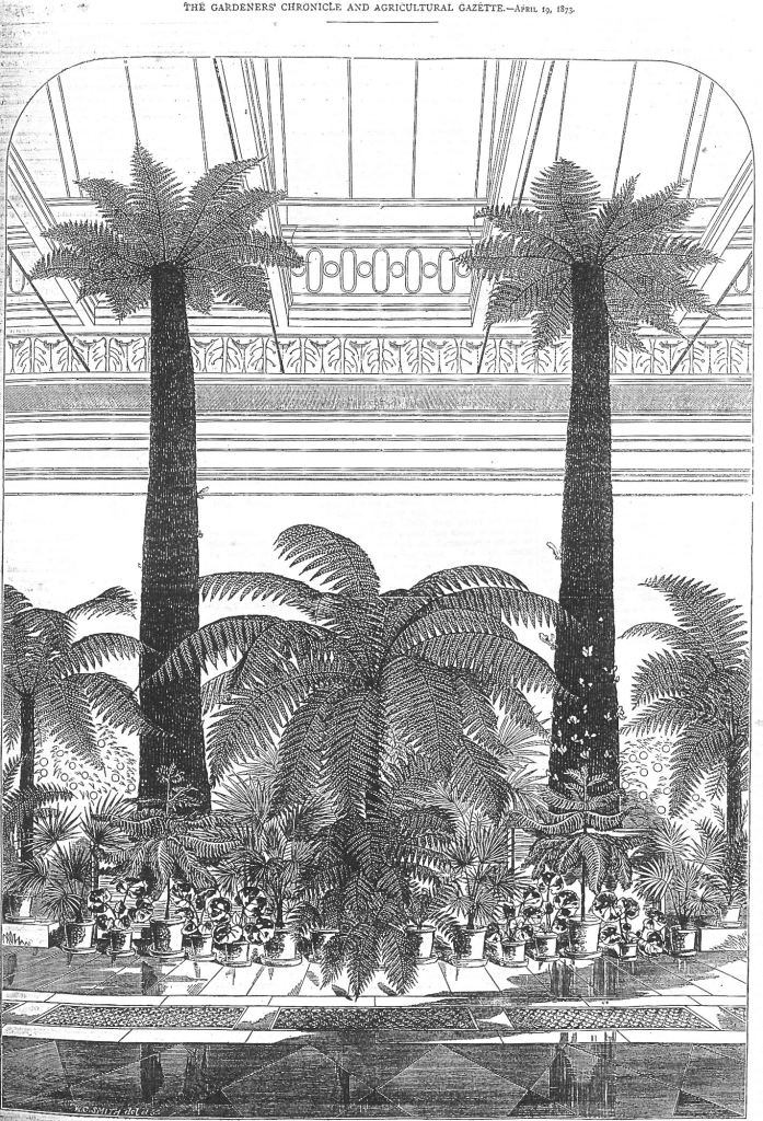 Old etching of Tree ferns at Gunnersbury Park