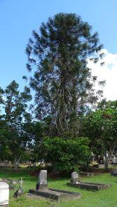 Bunya, Toowong Cemetery