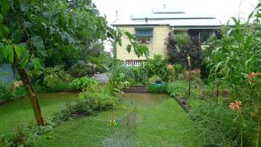 Productive garden, Feb 2015