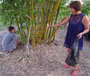 Pon and friend harvest Oldham's bamboo