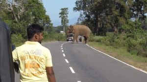 Elephant takes 'food toll' from travellers